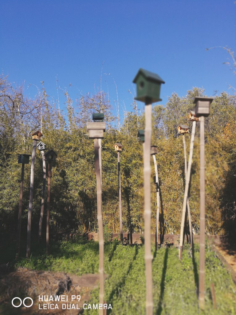 bird houses shot on huawei p10