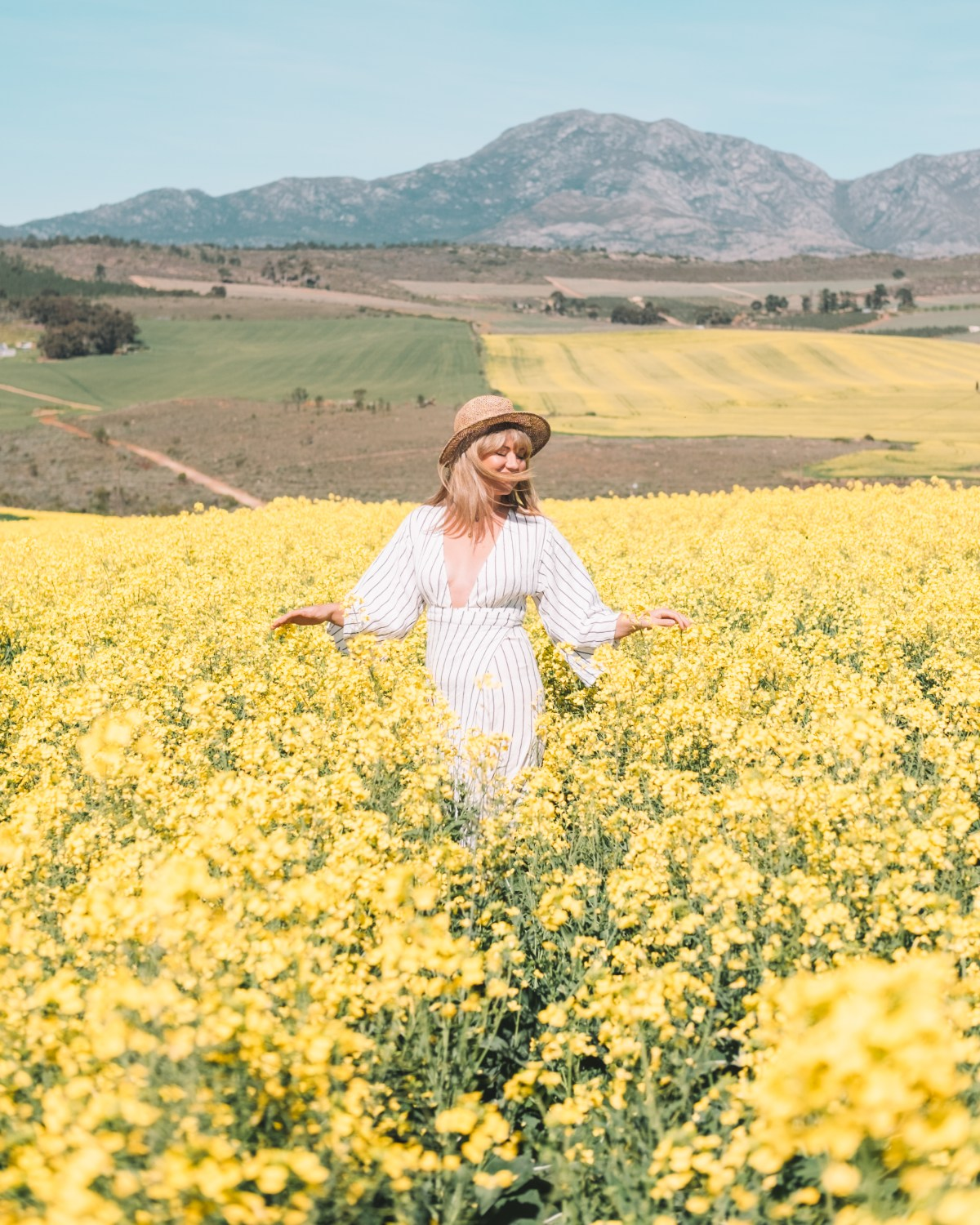 canola field Cape Town