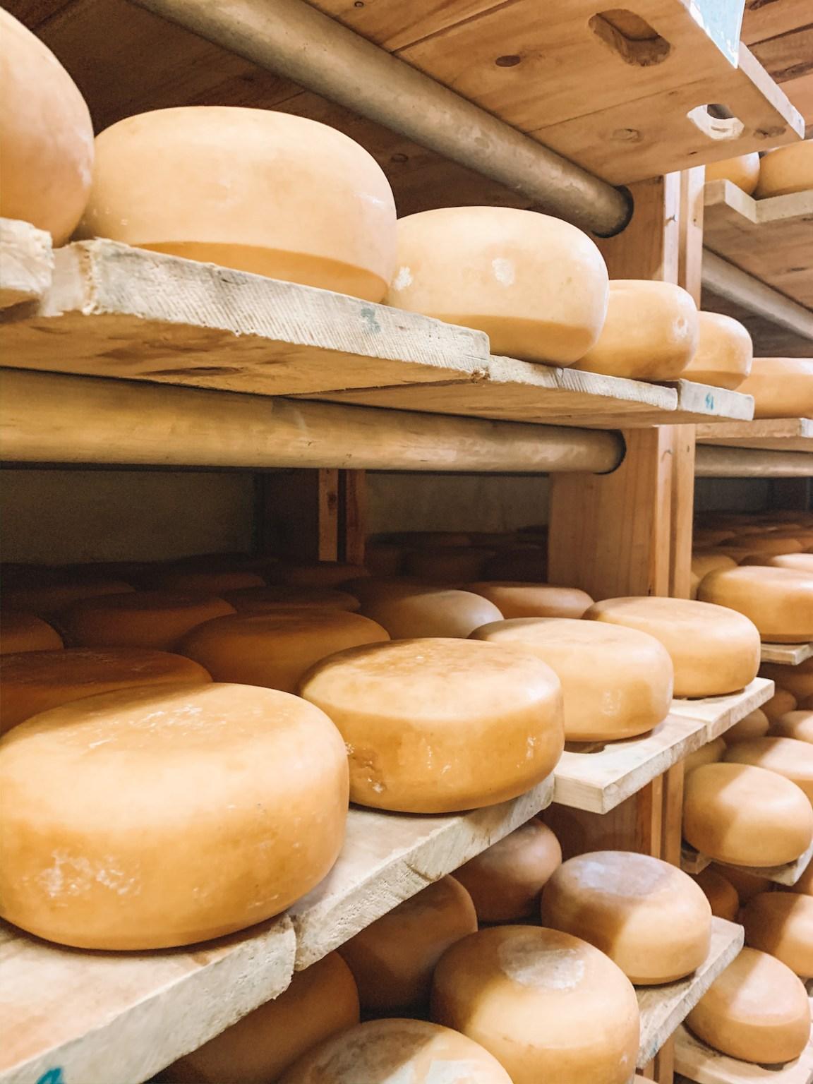 nairobi day trip browns cheese farm