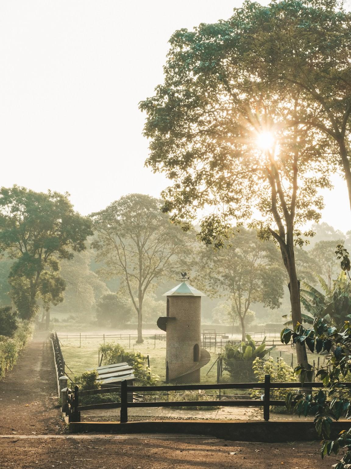 gibbs farm tanzania sunrise