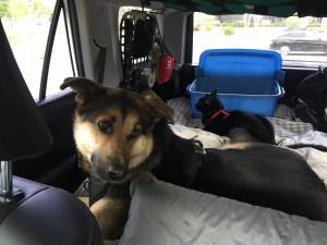 4Runner Pet Travel