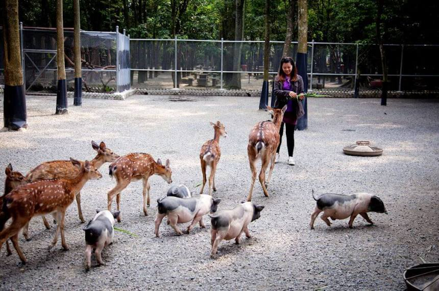 Feeding animals on Nan Yuan Resort Farm