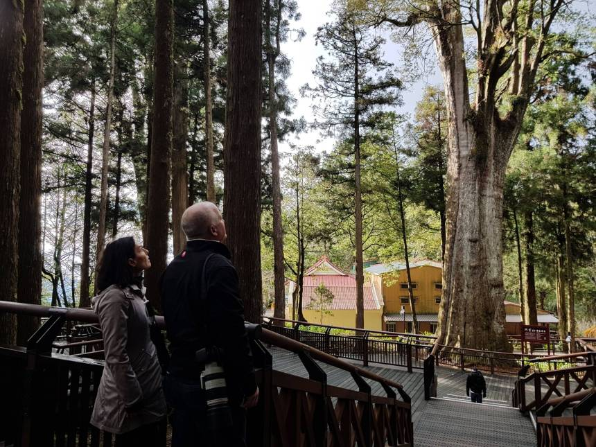 top 30 scenes of mytaiwantour_alishan forest