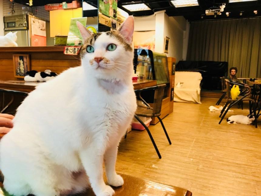 taiwan-scene-cat-cafe-in-taiwan-Music&Cats-01.jpg