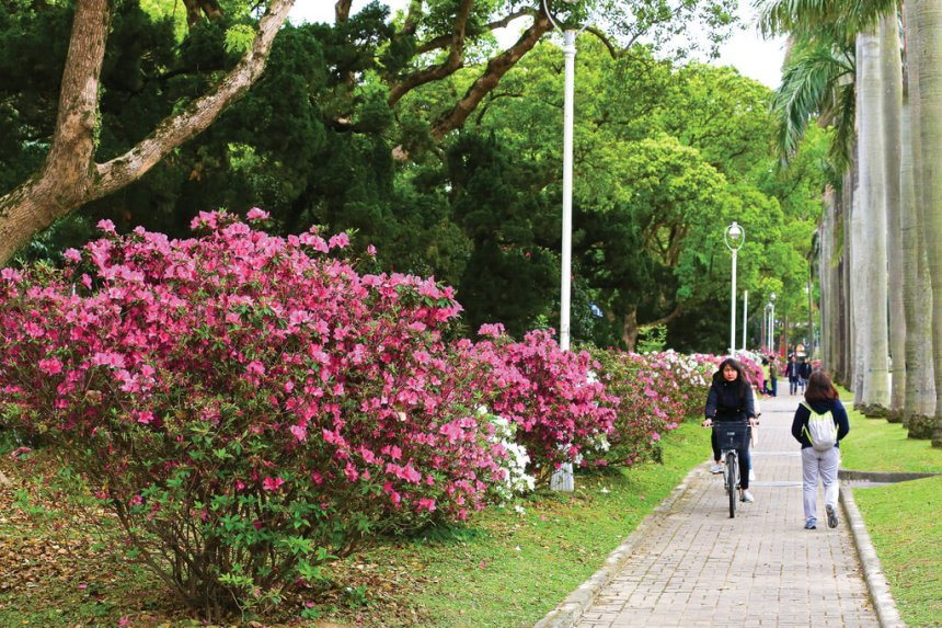 Flower-Viewing-in-Taipei-Taipei-azaleas-festival-NTU.jpg
