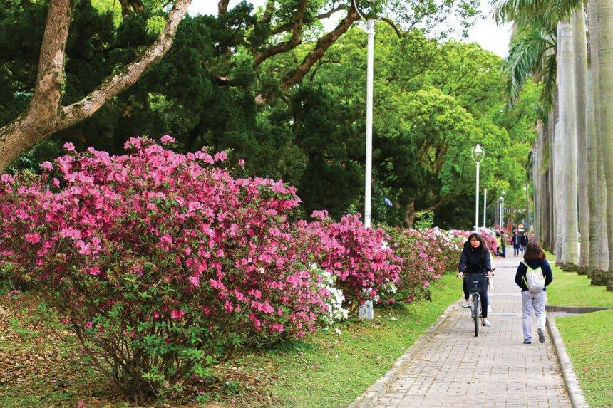 Flower-Viewing-in-Taipei-Taipei-azaleas-festival-NTU.jpg