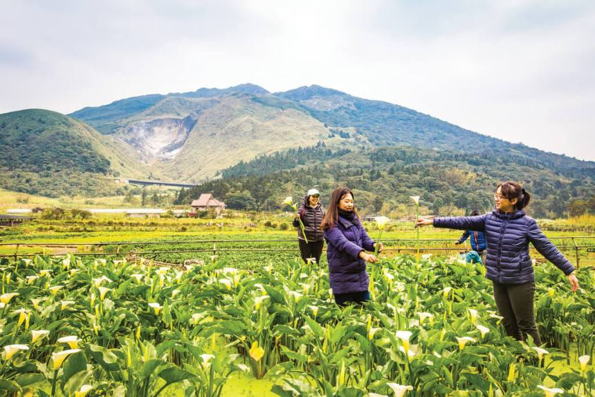 Flower-Viewing-in-Taipei-Yangmingshan-calla-lilly-festival-calla-lily-farms-in-zhuzhihu-2.jpg