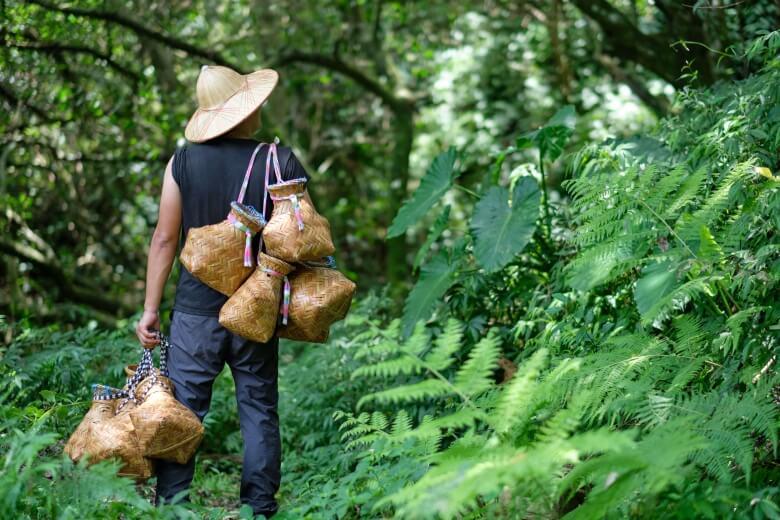 Local tea grower's guide of tea plantation.