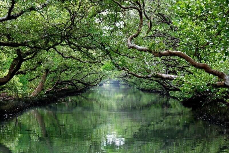 Boat tour in Tainan's Taijiang National Park