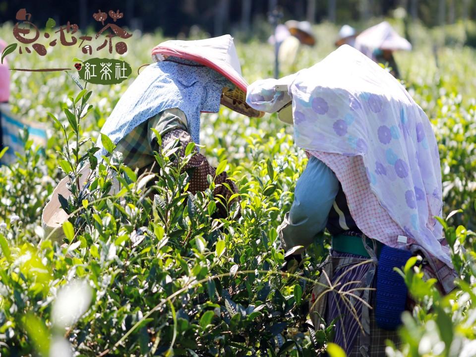 茶的小知識,原來喝茶有這麼多的營養?|買茶最推薦- 無可挑Tea