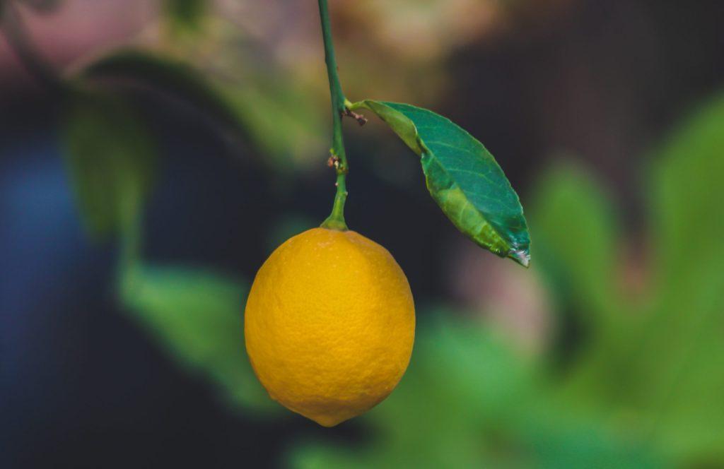 檸檬茶要挑新鮮檸檬