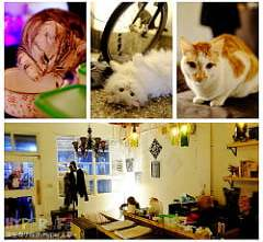 超可愛貓咪寵物餐廳【巷子有貓】,逢甲巷弄無菜單美食~一定要預約才吃的到的日式家常菜!