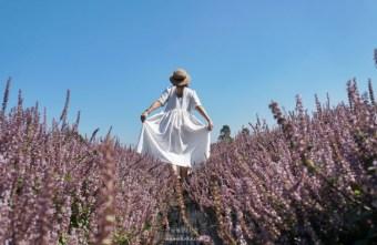 [桃園花彩節]紫色仙草花田夢幻登場 一起拍出日雜感照片