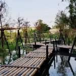 台中最新秘境│700多坪的花渲光明島,小橋流水加上柳樹和落羽松步道