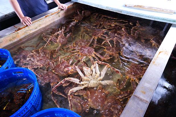 2019 10 08 011256 - 熱血採訪│帝王蟹價格大崩盤,台中屠龍老闆買下一整個水池的量!帝王套餐售完為止錯過等明年