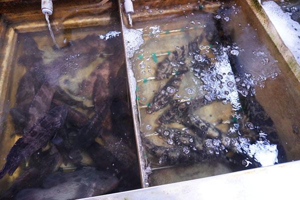 2019 10 15 010305 - 裕泰海產台中海鮮批發商,就在環中路鐵皮屋內,各類海鮮樣式俱全