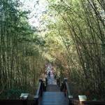 鳳凰山登山步道。台中平緩悠閒好走親子步道,人少竹林多,假日健行親近山林好去處
