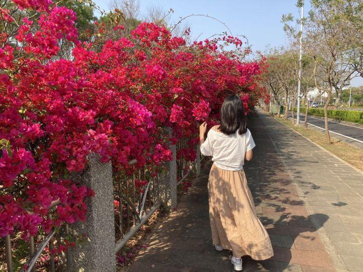 2021 03 10 235907 - 台中東大公園九重葛盛開中,宛若瀑布炸出圍籬,一片片桃紅色花牆好好拍~