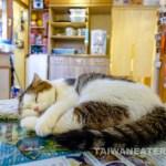 Kitten-Coffee-Garden-Pet-Cafe-Taipei-Dog-Cafe-11