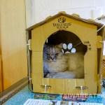 Kitten-Coffee-Garden-Pet-Cafe-Taipei-Dog-Cafe-34