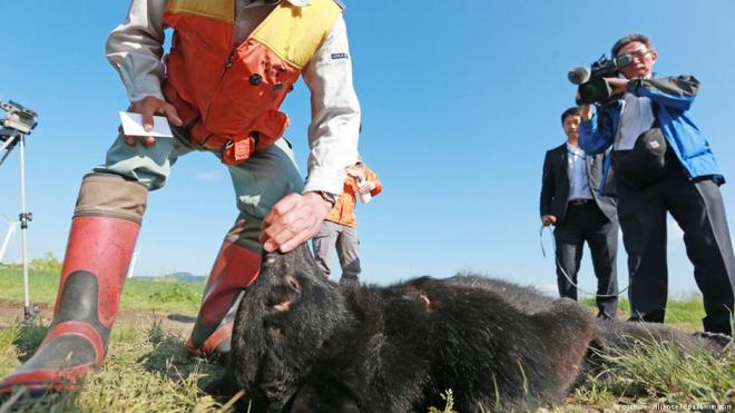 Hunters with a Asian black bear killed in Akita Prefecture Japan June 13 2016
