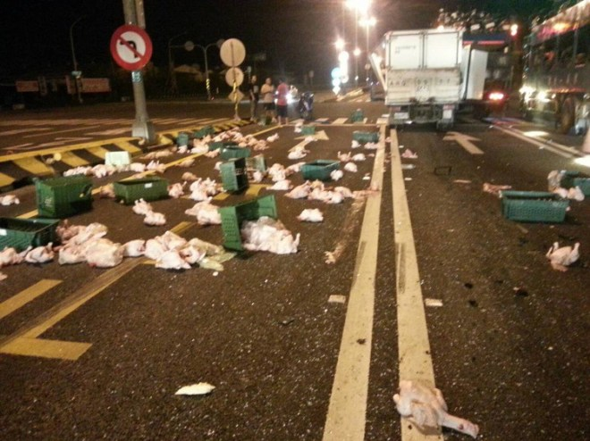 chicken carcasses on a road