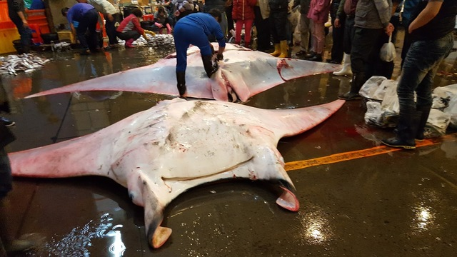 two giant manta rays are seen at a fishmarket in Kaohsiung