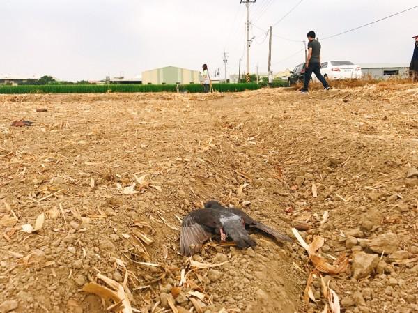 dead bird in field