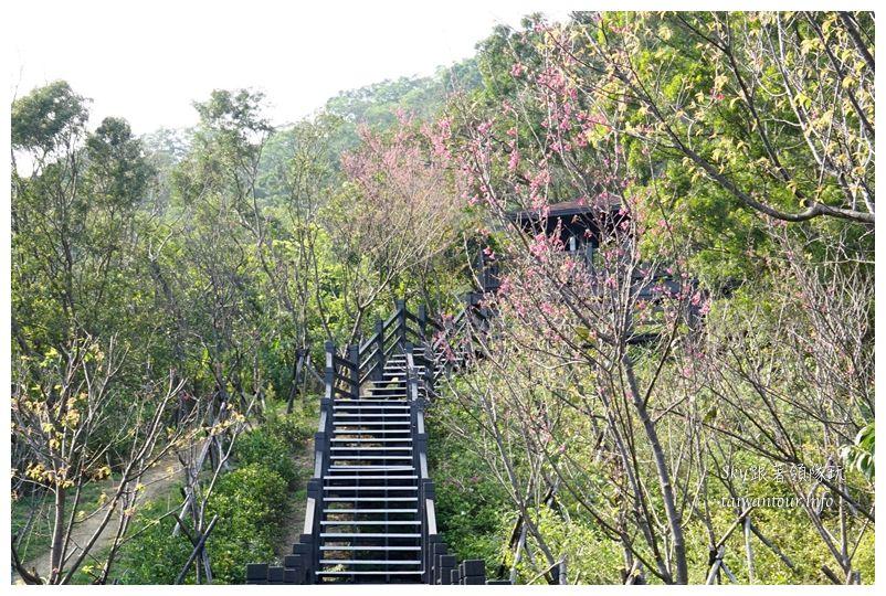 台北景點推薦大同山櫻花林03827