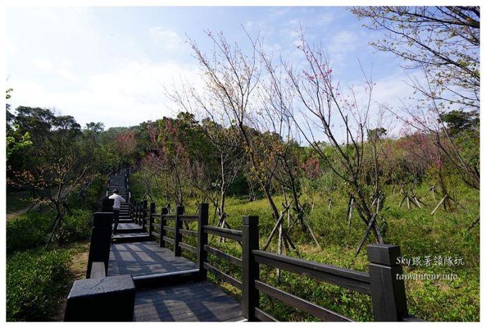 台北景點推薦大同山櫻花林03851