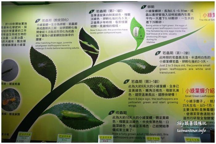 桃園美食推薦豬寶店異國料理DSC00387