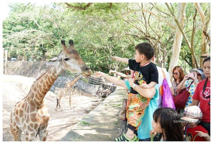 泰國親子旅遊綠山動物園kheow kheow00134