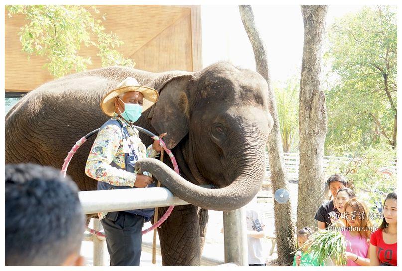 泰國親子旅遊綠山動物園kheow kheow00211
