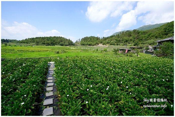 陽明山竹子湖繡球花大賞園DSC02721