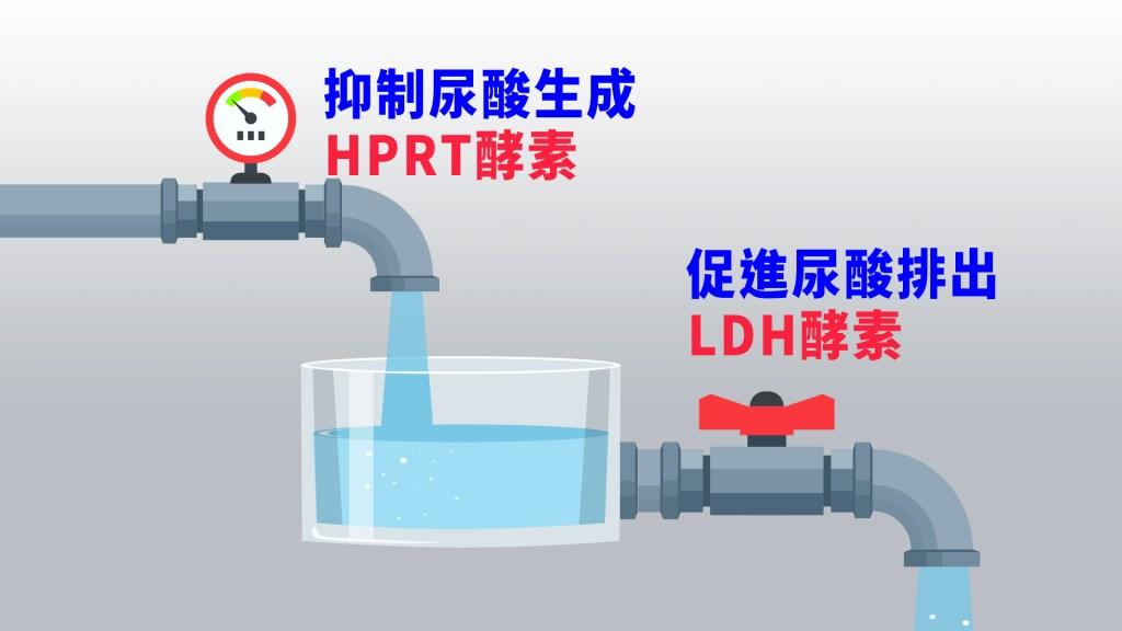 抑制尿酸生成促進尿酸排出