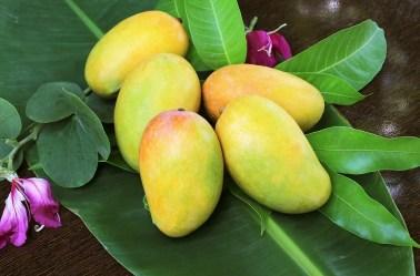 Premium Alphonso Mango Pulp Manufacturer, Supplier & Exporter – Taj Agro, Mumbai
