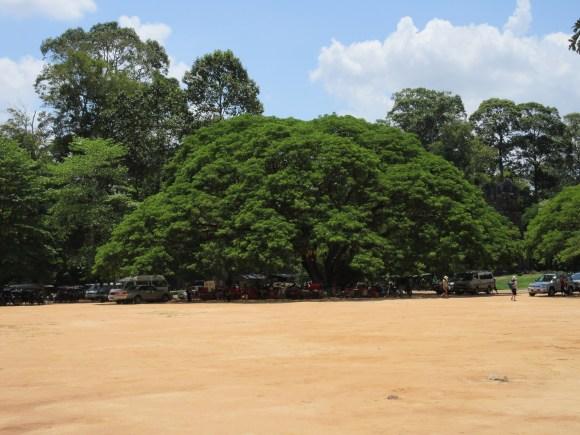Cambodia_underthetree2