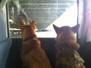車から外を眺めるニッチ