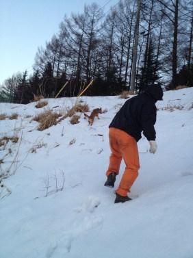 雪の中を走り回るニッチ