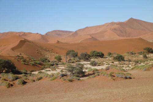 ナミビアナミブ砂漠2 (24)