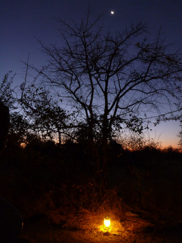夕のプラネットバオバブ (2)