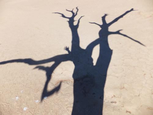 ナミビアナミブ砂漠1 (12)