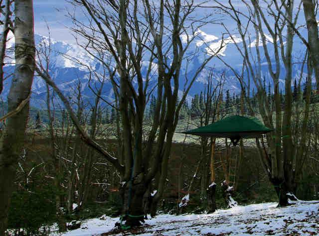 空中に張るハンモックのようなテント「Tentsile」 (9)