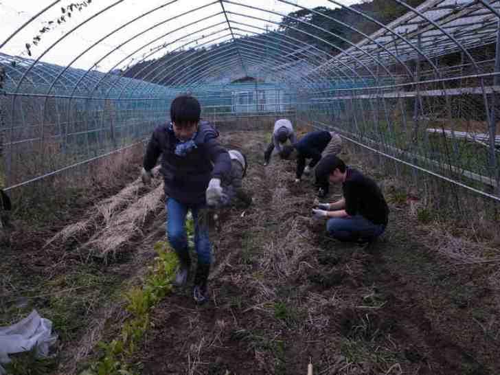 大根やかぶやジャガイモの収穫