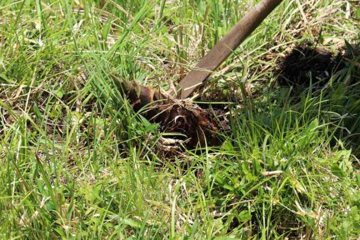 裏庭での「たけのこ掘り」が衝撃的だった件について (5)