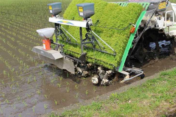 機械を使った田植えの後におこなう補植作業をしてきたよ (2)