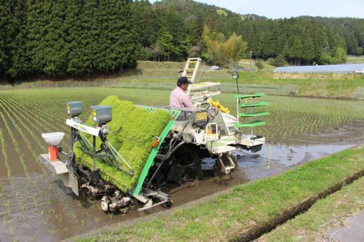 機械を使った田植えの後におこなう補植作業をしてきたよ (1)
