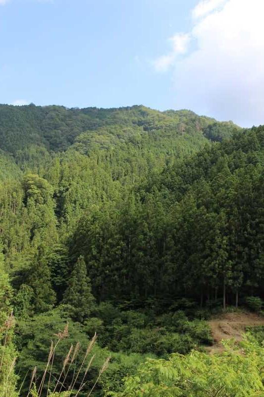 愛知県新城市作手の「鳴沢の滝」までサイクリングして泳いでみた! (5)