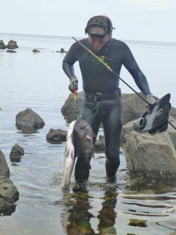 福井で魚突き!80cm弱の真鯛と40cm強の石鯛とキジハタとったどー!! (4)