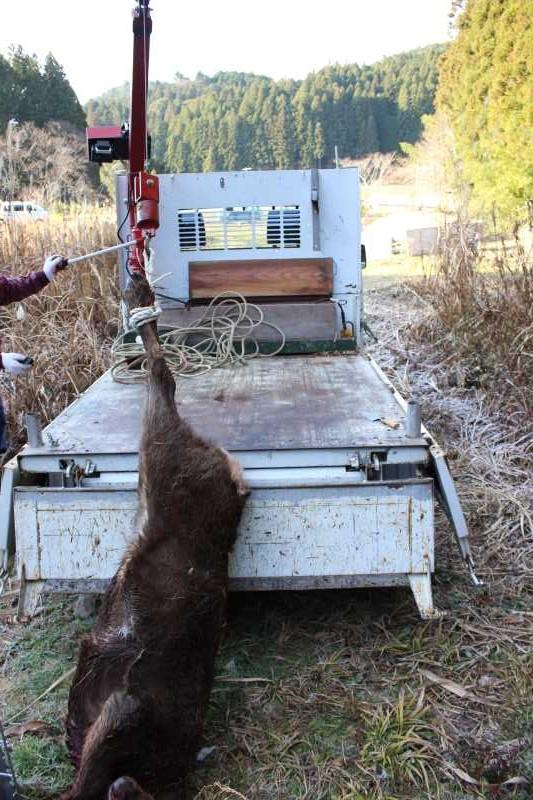 鹿の解体の初体験はクリスマスイブ!聖なる夜に鹿肉をいただきました (3)
